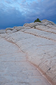 Arizona, Vermilion Cliffs National Monument, White Pocket, sandstone formations with lone ponderosa pine