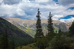 Colorado, San Isabel National Forest, Sawatch Range, Collegiate Peaks Wilderness, Missouri Gulch Trail, trees near timberline