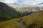 Colorado, San Isabel National Forest, Sawatch Range, Collegiate Peaks Wilderness, Missouri Gulch Trail, trees and shrubs near timberline