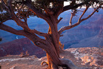 Arizona, Grand Canyon National Park, South Rim, view from Hopi Point