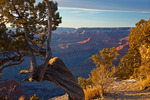 Arizona, Grand Canyon National Park, South Rim, Hopi Point area, view of canyon with twisted juniper tree