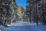 New Mexico, Gila National Forest, Pinos Altos Range with snow, Signal Peak/Cherry Creek area, road up Cherry Creek