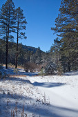 New Mexico, Gila National Forest, Pinos Altos Range with snow, Signal Peak/Cherry Creek area, Signal Peak Trail