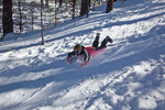 New Mexico, Gila National Forest, Pinos Altos Range with snow, Signal Peak/Cherry Creek area, Michelle Parent sledding