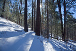 New Mexico, Gila National Forest, Pinos Altos Range with snow, Signal Peak/Cherry Creek area, forest