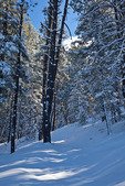 New Mexico, Gila National Forest, Pinos Altos Range with snow, Signal Peak/Cherry Creek area, Signal Peak Trail, fresh snow on forest and trail