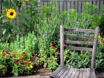 Wooden Chair in Country Garden