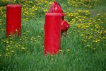 Red Hydrant in Spring Field