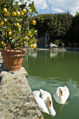 "Villa Reale's Lemon Garden, ""Giardino dei Lmoni.  Villa Reale, in the hills of Lucca, has a noble background. In 1805, Napoleon's sister, Elisa Baciocchi, joined the 16th-century Villa Orsetti with the surrounding properties and remodeled some of the structures.  The property was later owned by various noble families, but fell into disrepair in teh early 20th century.  Count and Countess Pecce-Blunt bought the property in 1924 and restored the park and replanted the grounds."