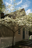 Dogwood trees in bloom along Duke of Gloucester Street, the main thoroughfare in Colonial Williamsburg's Historic area.  Colonial Williamsburg's 301-acre Historic Area includes 88 original 18th-century structures, many of which are open to the public.  It is a town-size museum, exhibiting 18th-century Williamsburg as it was on the eve of the Revolution. At that time Williamsburg was the capital of the Colony of Virginia.  Exhibition sites, costumed historic interpreters and demonstrations of colonial crafts and trade bring the 1770s back to life.
