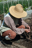 Historic interpreter working in a garden at Colonial Williamsburg. Colonial Williamsburg's 301-acre Historic Area includes 88 original 18th-century structures, many of which are open to the public.  It is a town-size museum, exhibiting 18th-century Williamsburg as it was on the eve of the Revolution. At that time Williamsburg was the capital of the Colony of Virginia.  Exhibition sites, costumed historic interpreters and demonstrations of colonial crafts and trade bring the 1770s back to life.