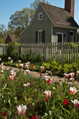Spring garden at Colonial Williamsburg. Colonial Williamsburg's 301-acre Historic Area includes 88 original 18th-century structures, many of which are open to the public.  It is a town-size museum, exhibiting 18th-century Williamsburg as it was on the eve of the Revolution. At that time Williamsburg was the capital of the Colony of Virginia.  Exhibition sites, costumed historic interpreters and demonstrations of colonial crafts and trade bring the 1770s back to life.