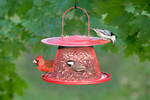 Bird feeder - with various species