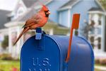 cardinal on mailbox