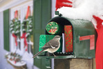 mockingbird on mailbox - winter holidaysr