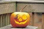 Carolina wren on pumpkin