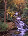 Roaring Fork stream.