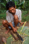 Pak Alec shaves bark from a stalk to create poison which he will apply to arrows for hunting.