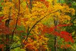 Autumn scene, Metcalf Bottoms.