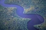 River through black mangrove.
