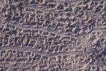 Loggerhead sea turtle hatchling tracks