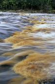 Big Shoals, Suwannee River, Big Shoals State Park, Florida