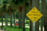 Atala butterfly crossing sign.