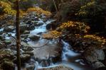 Autumn scene along Middle Prong Little River.