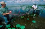 Ron Breeding and Greg Kaufman disassembling Florida apple snail traps.