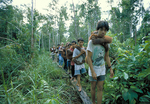 Orangutan Foundation International employees and volunteers carrying orangutans into the forest.