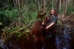 Birute Galdikas feeding ex-captive juvenile orangutans fruit (called papong).