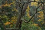 Autumn scene along Alum Bluff trail.