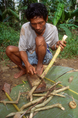 Pak Alec stripping bark from a branch to make poison.