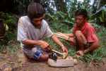 Pak Alec and Pak Masma squeeze poisonous liquid from compressed bark.