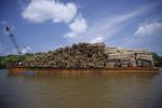 Barge loaded with logs from rainforest trees.