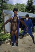Technician weighs a bornean orangutan