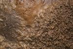 Fly maggots