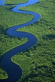 Waterway through black mangrove