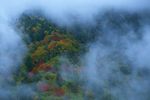 Autumn scene, Chimney Tops, Great Smoky Mountains National Park