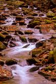 Autumn scene, Roaring Fork