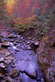 Autumn scene, Middle Prong, Little River, Great Smoky Mountains National Park