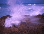 Sea water exploding through limestone rock at Blowing Rocks Preserve.