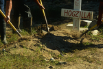 Digging up the remains of Hogzilla