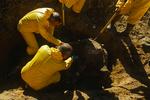 Examining the remains of Hogzilla