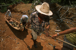 Dragging a new sampong from the rainforest