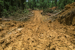 A new logging road replaces lowland primary rainforest.