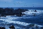 17 Mile Drive Pebble Beach, California