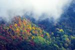 Autumn scene, Chimney Tops region.
