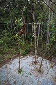 Gistok, a Bornean orangutan inside a cage at Pelindungan Hutan Dan Pelestarian Alam.