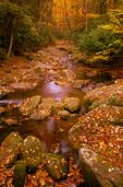 Autumn scene along Roaring Fork